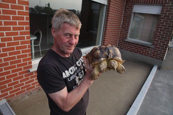 Schildpad Kianga is de oogappel van baasje Ronny Ryckoort.