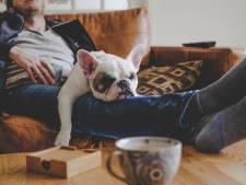 Un jugement qui va soulager les locataires détenteurs d'un animal de compagnie