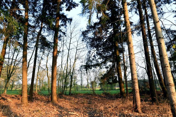 Het landgoed bestaat uit allemaal weilanden en akkertjes, omzoomd door houtwallen.