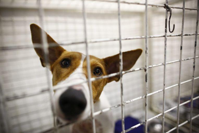 Een willekeurige hond die heel zielig kijkt en dus ter illustratie dient bij dit verhaal. Beeld epa
