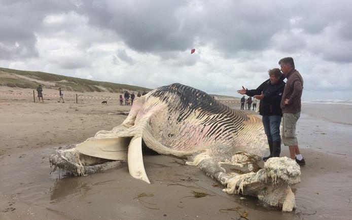 De aangespoelde gewone vinvis met Ecomare-bioloog Pierre Bonnet en walvisexpert Adrie Vonk.