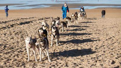 Binnenkort weer sledehondenrace op strand