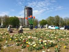 Samenwerking van InHolland en DelftBloeit om de stad te 'vergroenen en verbloemen'