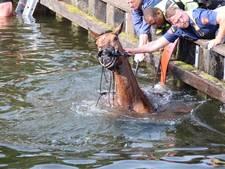 Paard valt met amazone en al in het kanaal in Aadorp