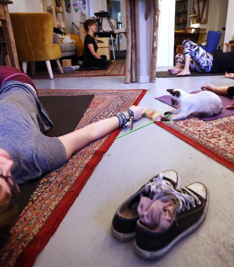 Kattenyoga in Breda: mediteren met een eigengereide snorhaar en op naar de kattenbingo