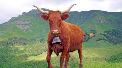 Franse hanen en koeien kunnen op beide oren slapen: typische plattelandsgeluiden en -geuren straks beschermd erfgoed