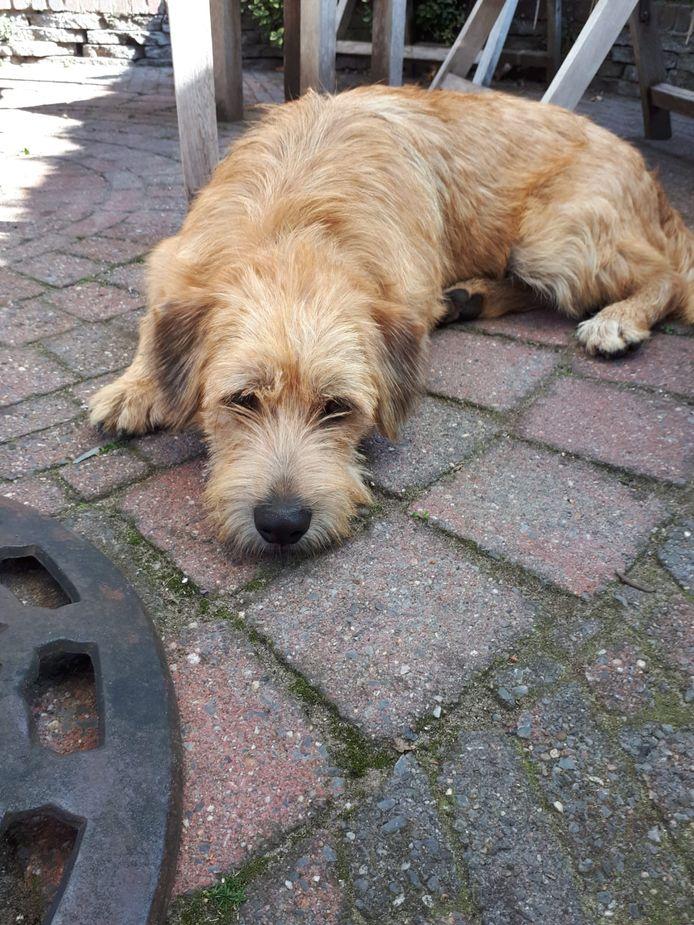 Hond Guus uit Nuenen.