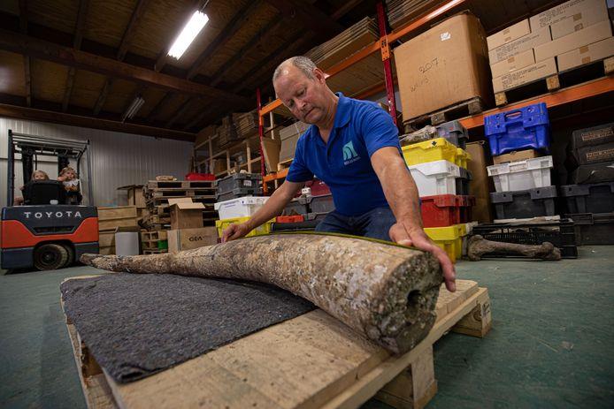 Jeroen Kempers van North Sea Fossils toont de slagtand van een bosolifant van zeker 120.000 jaar oud. Het is voor het eerst dat een tand van de bosolifant in de Noordzee is gevonden.