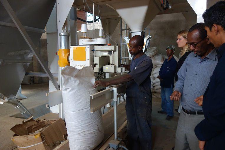 Het gewassen en gezeefde zaad wordt in een zak genaaid. Tweede van rechts: manager Teklemichael Samuel van het Ethiopische import en export-bedrijf Yibelu Mossiewa. Beeld wb