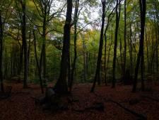 Zwangere vrouw (29) sterft gruweldood in Frans bos: verscheurd door loslopende honden