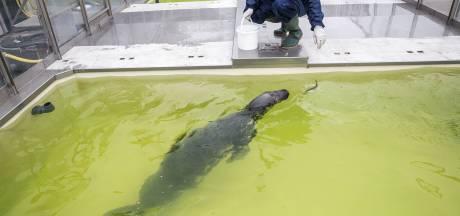 Schattig die zeehonden, maar zo populair waren ze vroeger niet