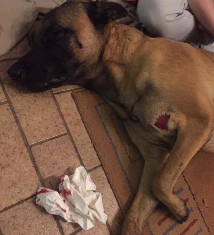De hond werd zo zwaar mishandeld dat hij uit zijn lijden moest worden verlost.