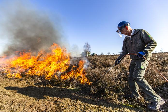 Aan de bovenwindse kant wordt de heide eerst in brand gestoken, zodat de oprukkende vlammen van de andere kant niet kunnen overspringen naar de heide die gespaard moet blijven.
