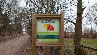 Droogte bedreigt insecten en vogels op Kalmthoutse Heide