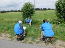 Bermbeheer en boerenlandvlinders in het Binnenveld