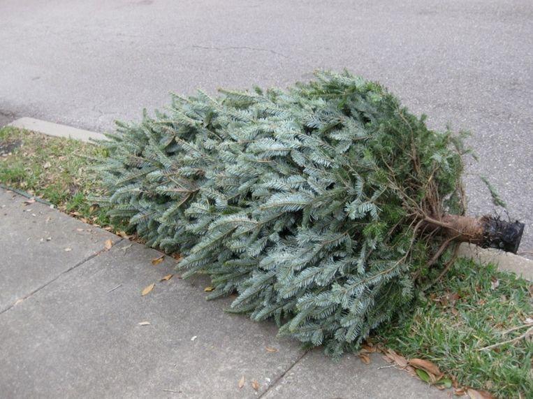 Kerstbomen zijn tot vrijdag 31 januari gratis welkom in het recyclagepark.