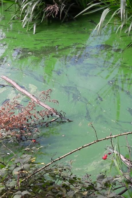 Negatief zwemadvies voor natuurbad bij Scholtenhof in Etten