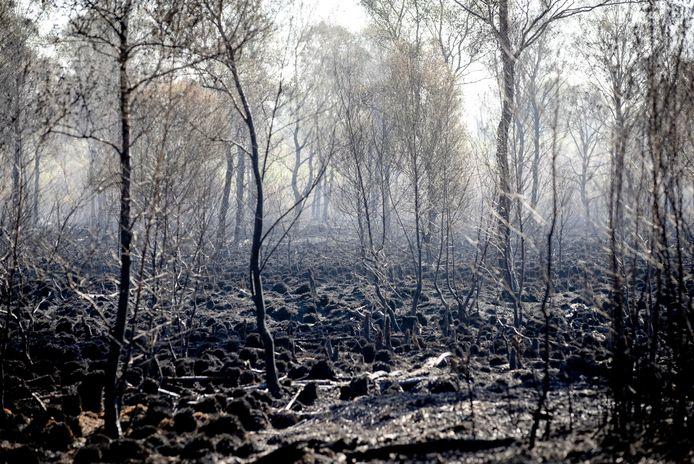 Verbrande bomen en veen in De Peel. De natuur zal zich herstellen maar mogelijk zijn zeldzame plantensoorten voorgoed verdwenen.