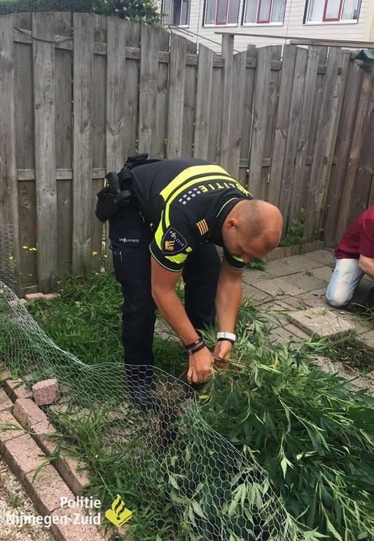 De politie helpt de bewoner mee met het opruimen van zijn hennepplanten.