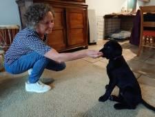 Een jaar lang voor een puppy zorgen? 'Het is voor het goede doel'