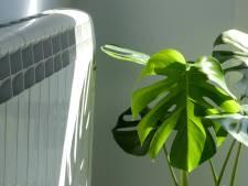 Verwarming aan? Neem de volgende maatregelen voor je kamerplanten