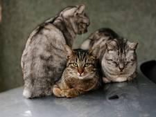 Voorstel van Smolders om kattenstront in Tilburg aan te pakken blijkt 'onmogelijk'