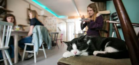 Altijd al een eigen kattencafé gewild? Mispoes Den Bosch zoekt nieuwe eigenaar