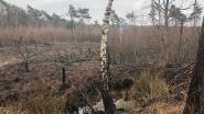 400 vierkante meter heidegrond afgebrand op Kalmthoutse Heide