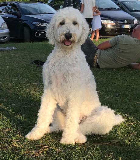 Rijkswaterstaat vindt vermiste hond Pip
