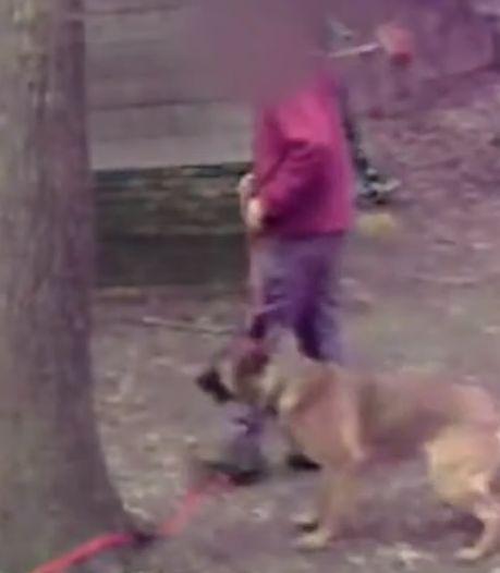 Schokkende beelden: politiehonden zwaar mishandeld door trainers in de Achterhoek