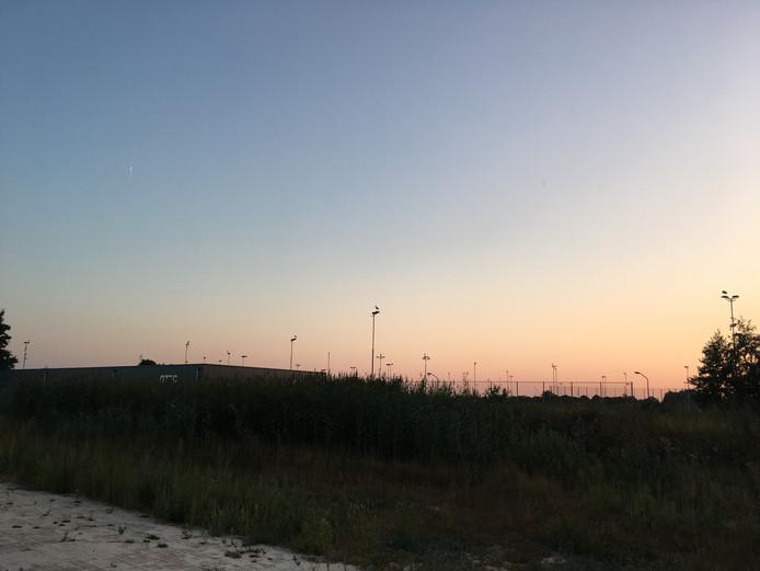 Ooievaars op de lichtmasten van sportpark de Rusheuvel in Oss. Op bijna elke paal zit een vogel.