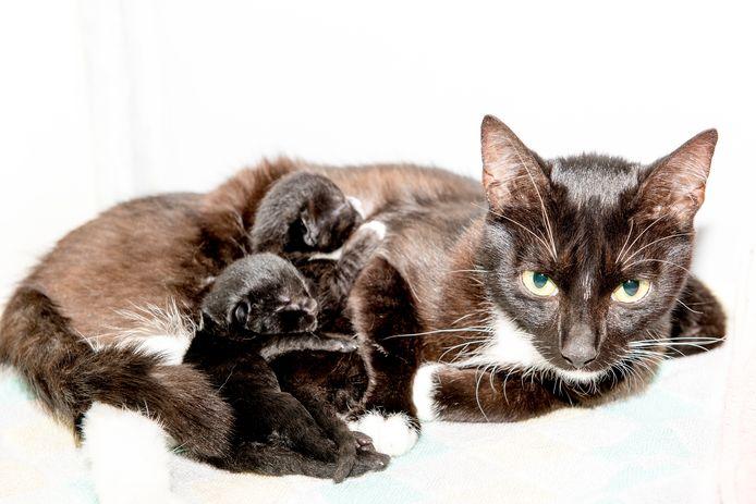 Dierenasiel Tiel, poes met haar kittens die zijn binnengebracht