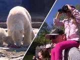 IJsberen vieren Pasen in dierentuin van Berlijn