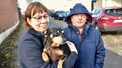 Hond Tiko alarmeert baasjes: 20.000 strips verloren in hevige zolderbrand