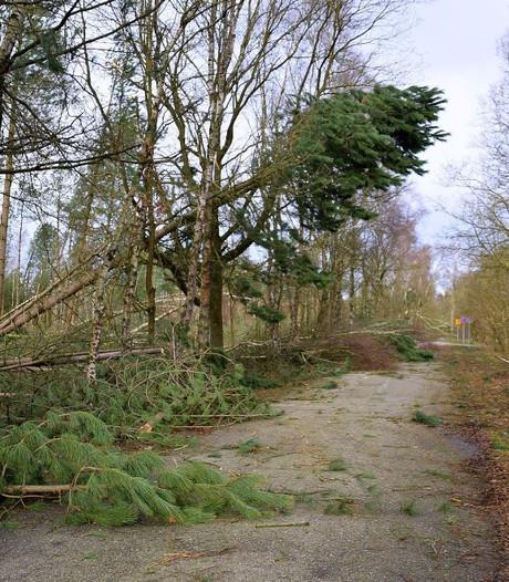 Boswachter Brabants Landschap: Wandelaars in bos moeten alert zijn op gevaarlijke situaties