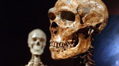 Neanderthaler dacht dan toch na voordat hij zijn hoofd in de strijd gooide