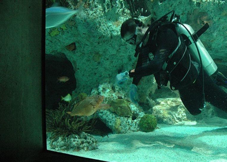 Duikers krijgen de kans om te zwemmen met allerlei soorten zoetwatervissen.
