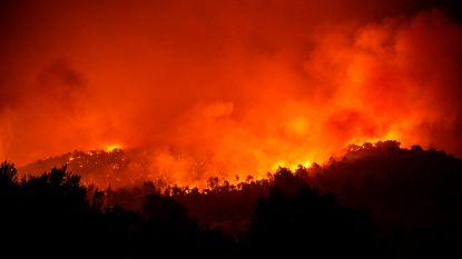 """Bosbranden op Grieks eiland na drie dagen deels onder controle, maar """"ecologische ramp"""""""