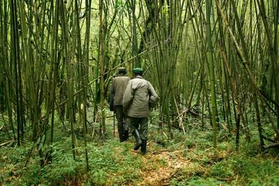 droefenis-door-dood-dappere-boswachters-in-gorillapark