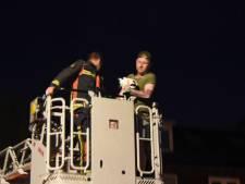 Man redt met hulp van brandweer kat van het dak