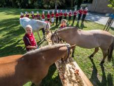 Buffet voor de paarden van manege Het Roessingh in Enschede