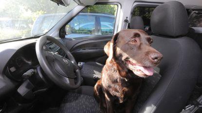 Hoge temperaturen voorspeld: laat kinderen en dieren niet achter in de auto