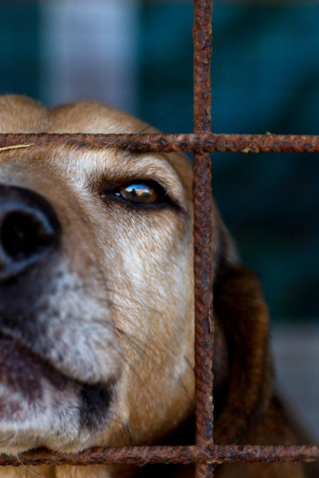 Trois chiens saisis à Modave après la diffusion d'une vidéo sur Facebook