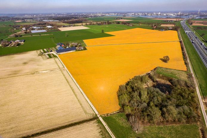 Het gebruik van Roundup is nogal zichtbaar. Percelen die zijn behandeld kleuren geel, zoals hier bij Wilp langs snelweg A1.