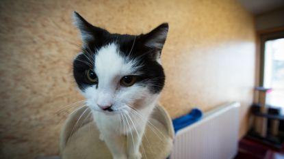 Kortingsbonnen voor sterilisatie van huiskatten