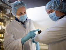Rotterdamse onderzoekers ontdekken verjongingskuur