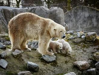 """Welke diersoorten horen in de zoo? """"Over een olifant valt er nog te discussiëren, over een ijsbeer niet"""""""