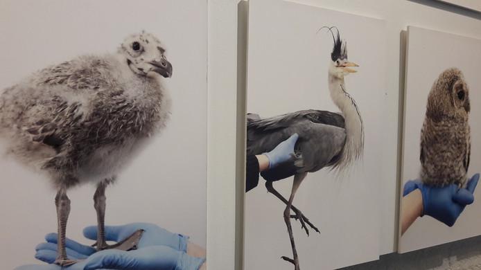Fotograaf Anjès Gesink pakt uit met 'Vogels huilen niet', foto's van vogels in de vogelklas van Karel Schot, een vogelopvang in Rotterdam-Zuid.