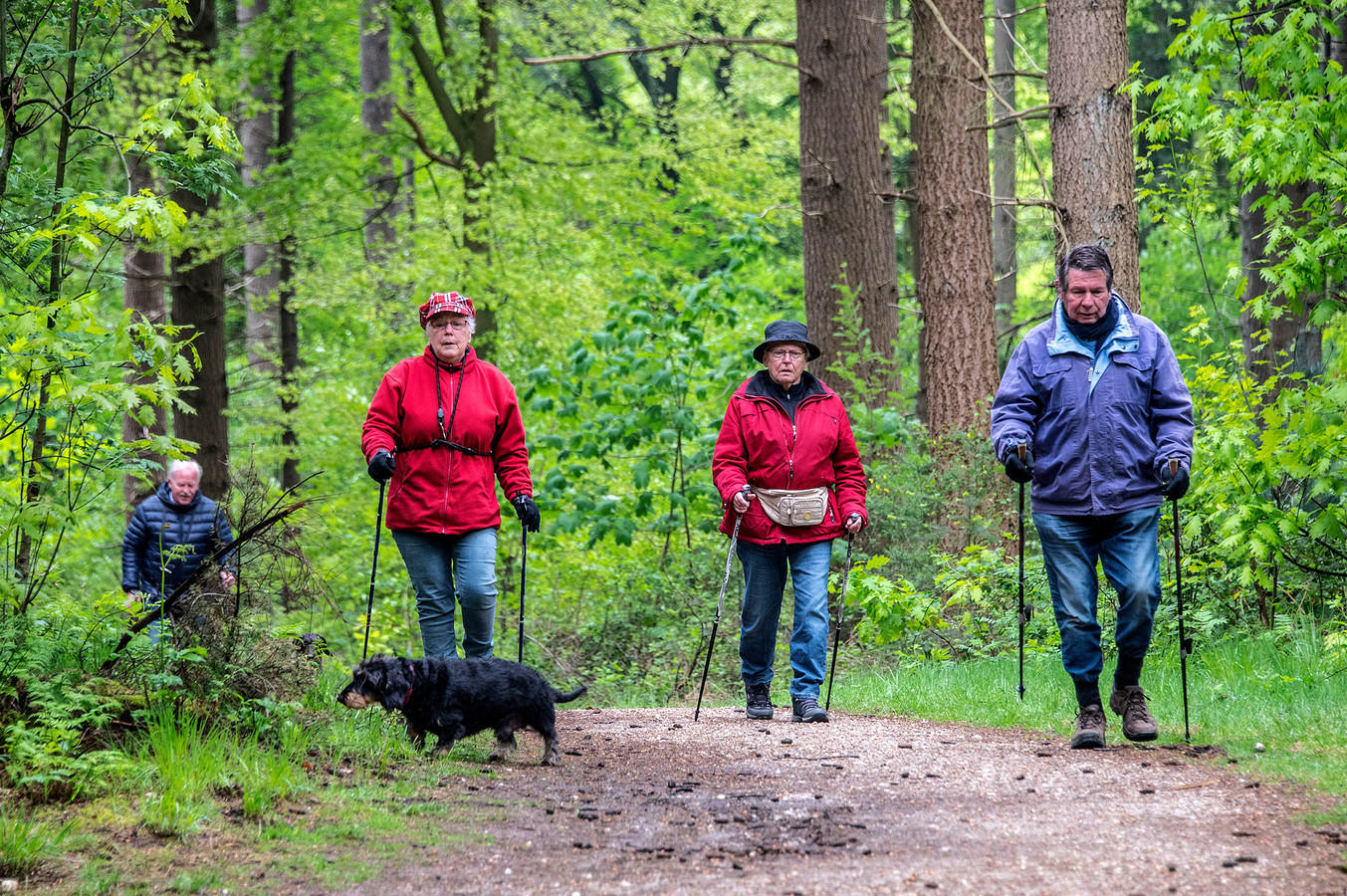 Ouderen aan de wandel in de bossen in Mook.