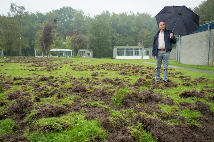 Bernard van de Berg staat versteld van de wroetschade van de zwijnen op het veld voor de school waar hij adjunct-directeur is. Zo erg is het nog nooit geweest.